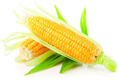 testy summer foods Corn