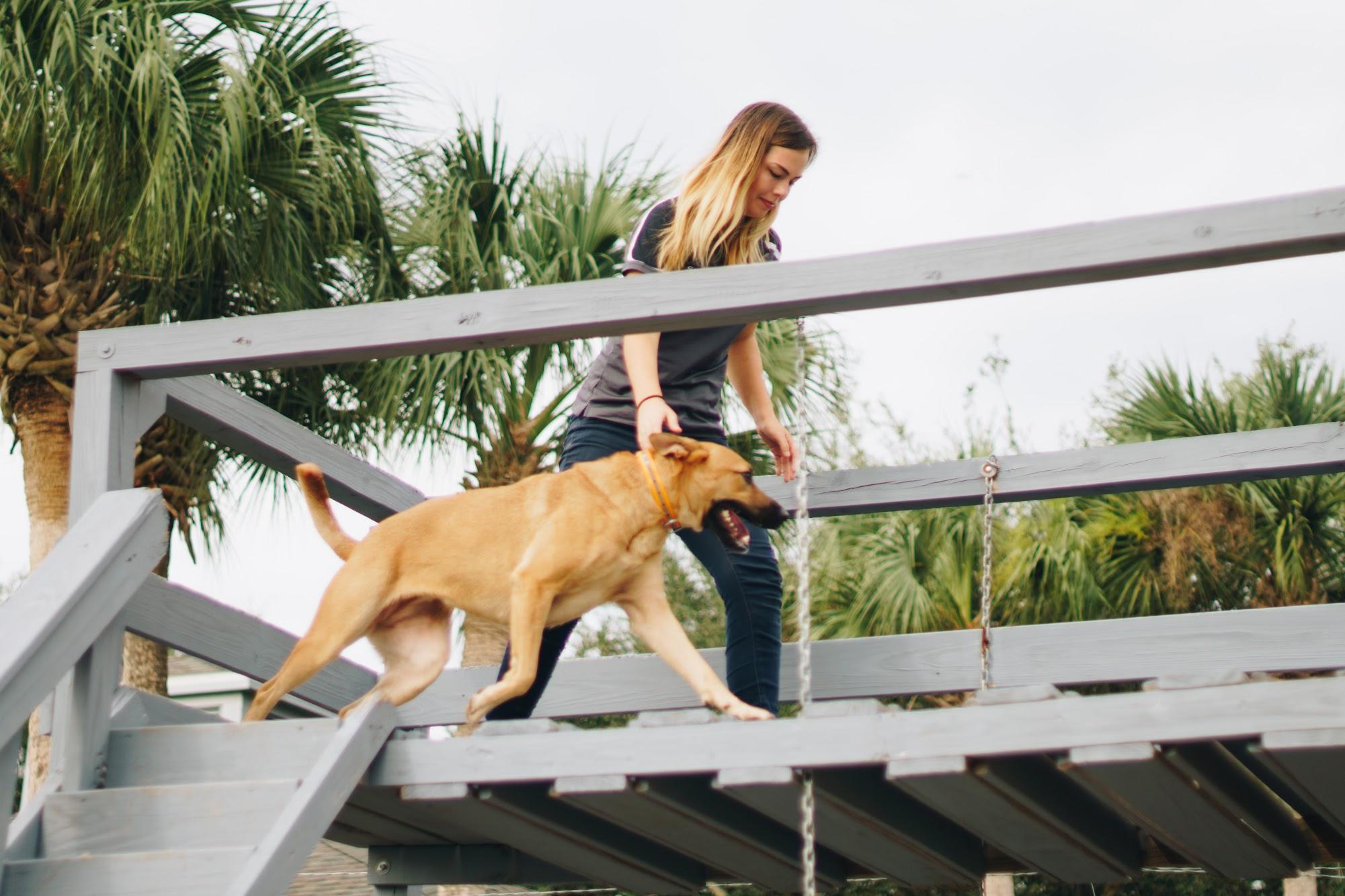 K-9 school dog training center